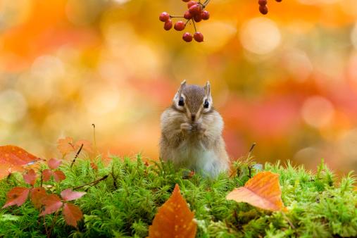 秋が待ち遠しくなるコピー